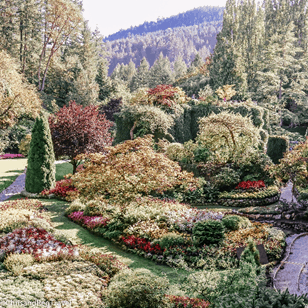 A beautiful view of the main garden in Butchart Gardens on our Vancouver island road trip