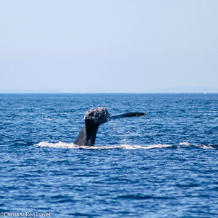 Humpback whale tail!