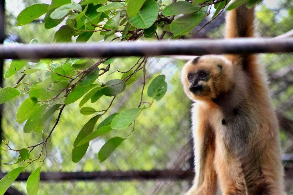 Phnom Tamao Wildlife Rescue Center is an exciting thing to do in Phnom Penh