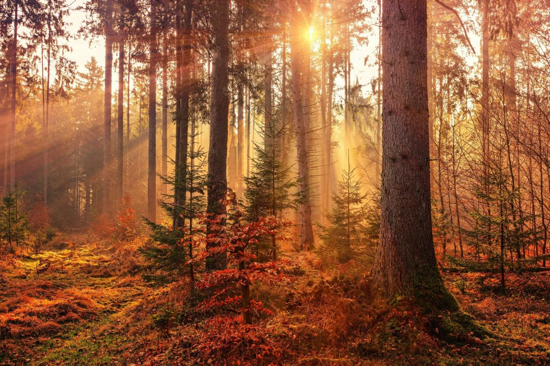 autumn trees; best fall vacations