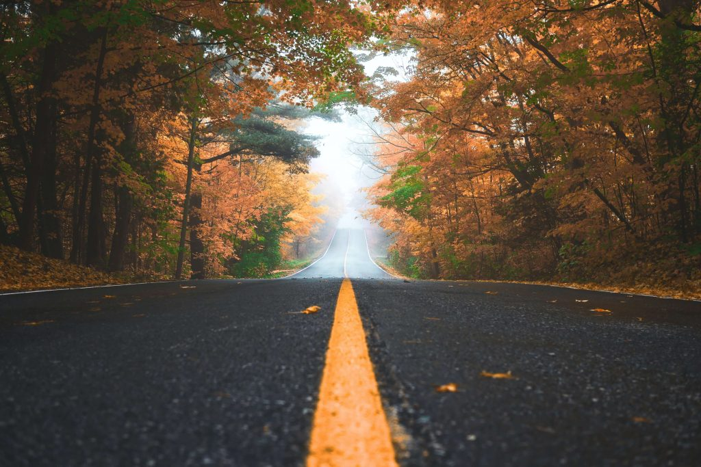 road and foliage; fall road trips